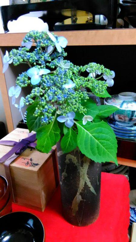 みやの紫陽花