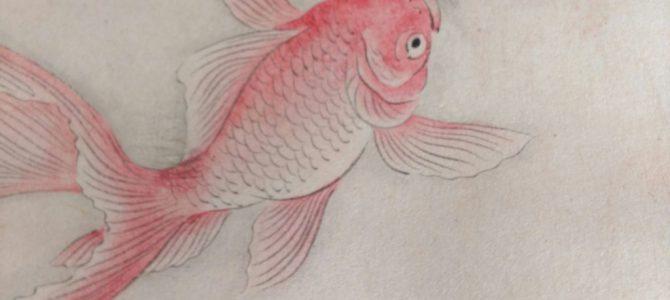 またまた好みの金魚!…掛け軸