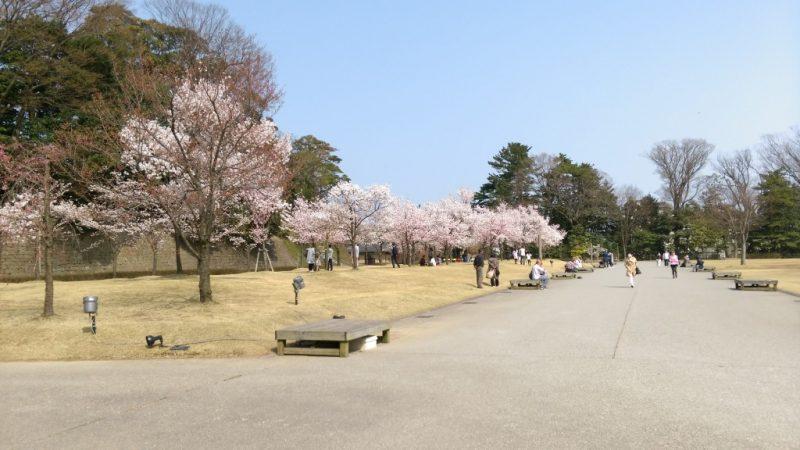 金沢城址公園桜