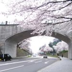 2018金沢桜満開金沢城