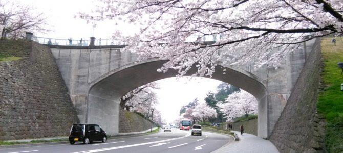 金沢も桜満開!…良い季節を迎えています