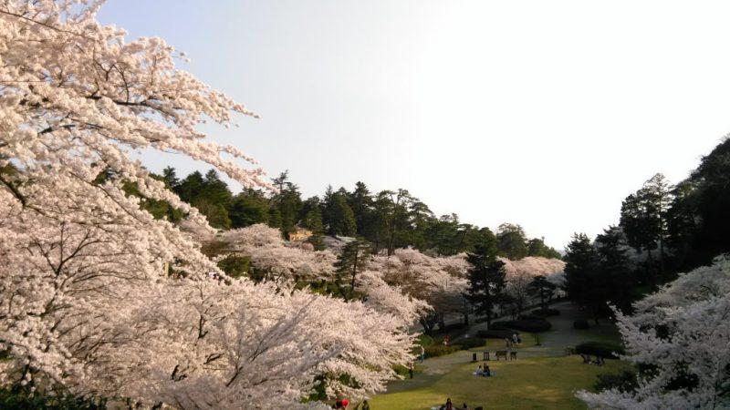 桜満開石川門兼六園