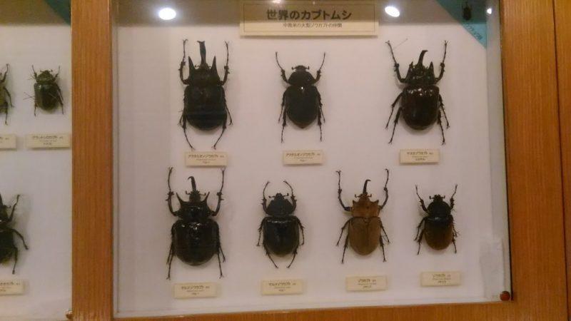 ふれあい昆虫館