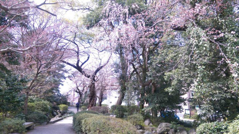 金沢桜白鳥路