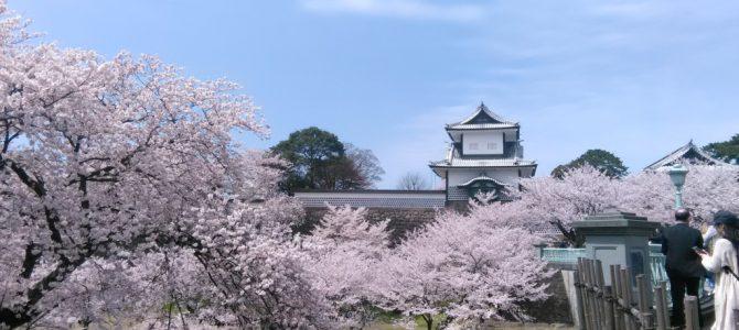金沢も桜満開で…初々しい市松人形