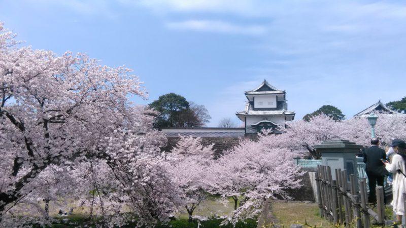2019桜金沢城